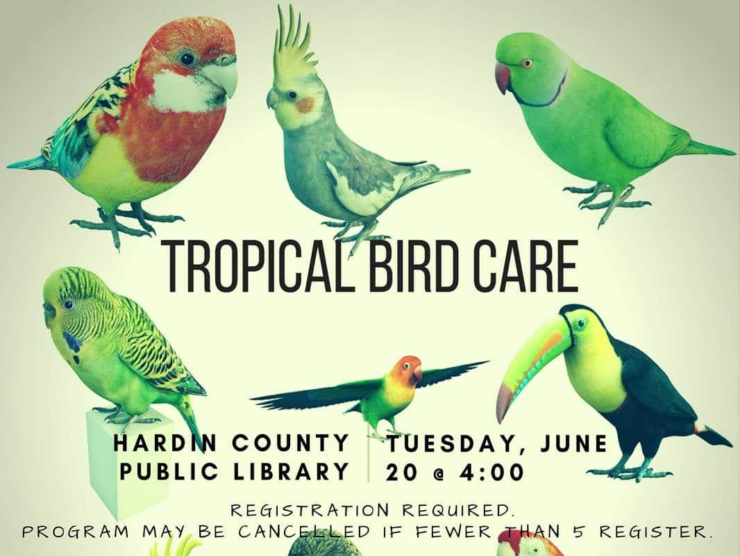 June 20 Tropical Bird Care